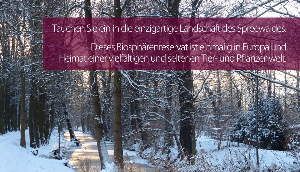 slider_winter215.jpg
